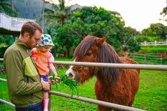 Engendre con su pequeña hija que alimenta un caballo Fotografía de archivo