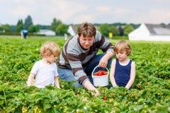 Engendre y dos muchachos del niño en granja de la fresa en verano Imágenes de archivo libres de regalías