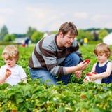 Engendre y dos muchachos del niño en granja de la fresa en verano Foto de archivo