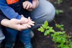 Engendrez aider son fils à explorer le jardin Le concept du passe-temps commun, loisirs, transfert d'expérience aux enfants photos stock