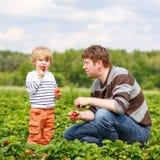 Engendrez et peu de garçon d'enfant à la ferme de fraise en été Photo stock