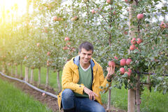 Engineer in orchard Stock Image
