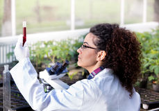 Engineer working on plant protection Stock Photography