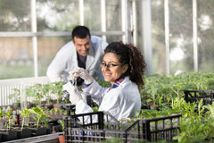 Engineers with seedlings in greenhouse Stock Image