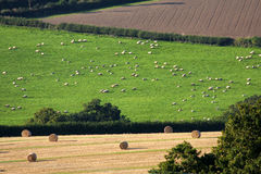 England countryside during harvest Royalty Free Stock Image