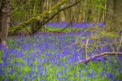 England. English countryside springtime weekend walk Royalty Free Stock Images