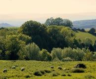 England gloucestershire der Wald des Dekans, wie von ruardean gesehen Stockfoto