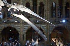 england historii London muzeum naturalny Zdjęcie Stock
