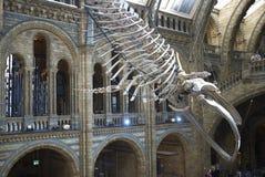 england historii London muzeum naturalny Fotografia Stock