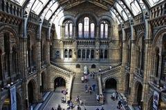 england historii London muzeum naturalny Obrazy Royalty Free