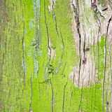 in england london old      bark and abstract wood texture Stock Photography