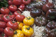 England London, Southwark, stadmarknad, grönsakStall, tomatskärm Fotografering för Bildbyråer