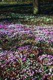 england springtime Royaltyfri Foto