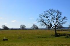 england springtime Arkivfoton