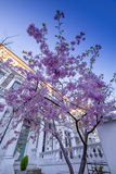England. Springtime in London Capital of England 1st flowers Stock Image