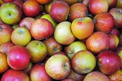 Englisch-Cox-Äpfel lizenzfreie stockfotos
