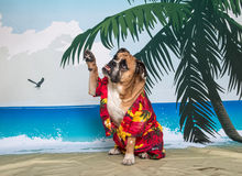 Englische Bulldogge, die hoch fünf wellenartig bewegt Stockbild