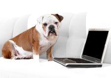 Englische Bulldogge mit Notizbuch Lizenzfreies Stockfoto