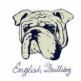 Englische Bulldoggenvektorillustration Lizenzfreies Stockbild