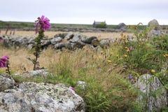 Englische Cornwall-Landschaft der wilden Blumen Lizenzfreie Stockbilder