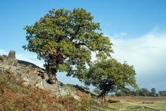 Englische Land-Landschaft Stockfotografie