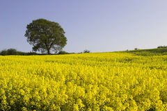 Englische Landschaft Stockfoto