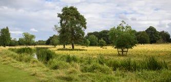 Englische Landschaft, die durch Felder und Wiesen geht Lizenzfreies Stockbild