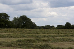 Englische Landschaft, Holmer-Grün, Buckinghamshire lizenzfreies stockbild