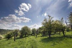Englische Landschaft im chiltern Tal Stockfoto