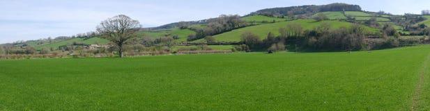 Englische Landschaft im Frühjahr Stockfotografie