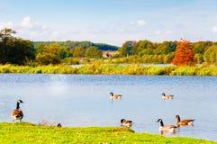 Englische Landschaft im Herbst Stockbild