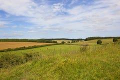 Englische Landschaft mit Wildflowers Lizenzfreie Stockbilder