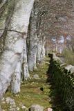 Englische Landseite Stockfoto
