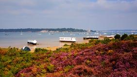 Englische purpurrote Heide mit Ansicht zu Brownsea-Insel Poole-Hafen Dorset England Großbritannien Stockfoto