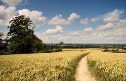 Englische Sommer-Landschaft Stockfoto