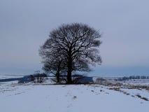 Englische Winterlandschaft mit einem großen Baum Stockbild