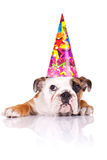 Englischer Bulldoggewelpe, der einen Geburtstaghut trägt stockfotos