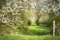 Englischer Seitenweg im Frühjahr Lizenzfreie Stockfotos