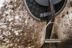 Englischer Steigbügel Stockfoto