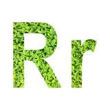 """Englisches Alphabet """"R r† gemacht vom grünen Gras auf weißem Hintergrund für lokalisiert Lizenzfreie Stockfotos"""