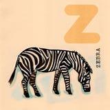 Englisches Alphabet, Zebra Stockbild