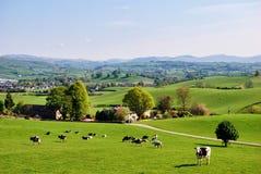 Englisches Feld im Frühjahr Lizenzfreie Stockfotos