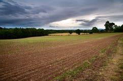 Englisches Landwirtfeld stockfotos