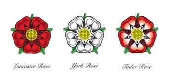 Englisches Rosen-Emblem Stockfotografie