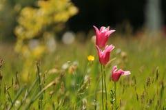 Englisches Sommer-Feld Stockbild