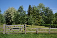 Englisches Sommer-Feld Lizenzfreie Stockfotografie