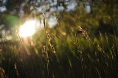 Englisches Sommer-Feld Stockfotografie