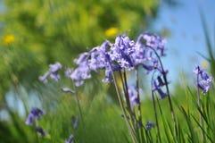 Englisches Sommer-Feld Lizenzfreie Stockfotos