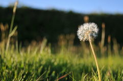 Englisches Sommer-Feld Lizenzfreies Stockbild