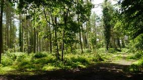 Englisches Waldland Stockfotos